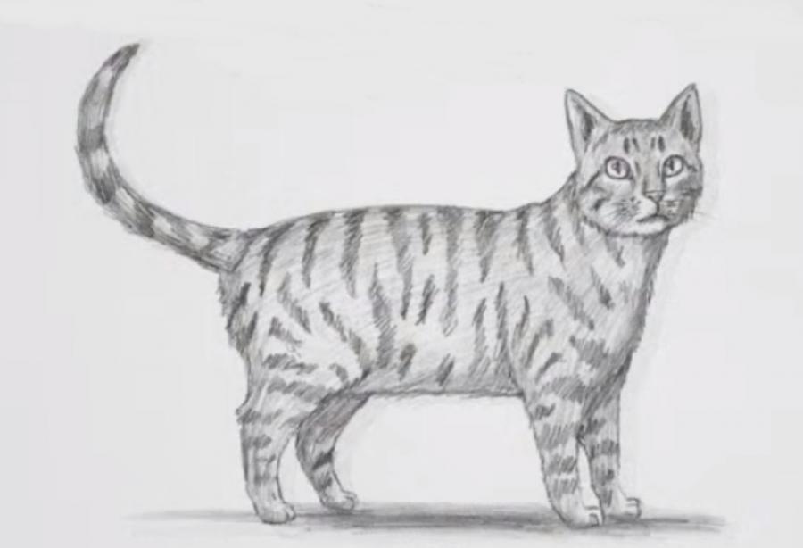 Как шаг за шагом нарисовать кота в полный рост - фото 9