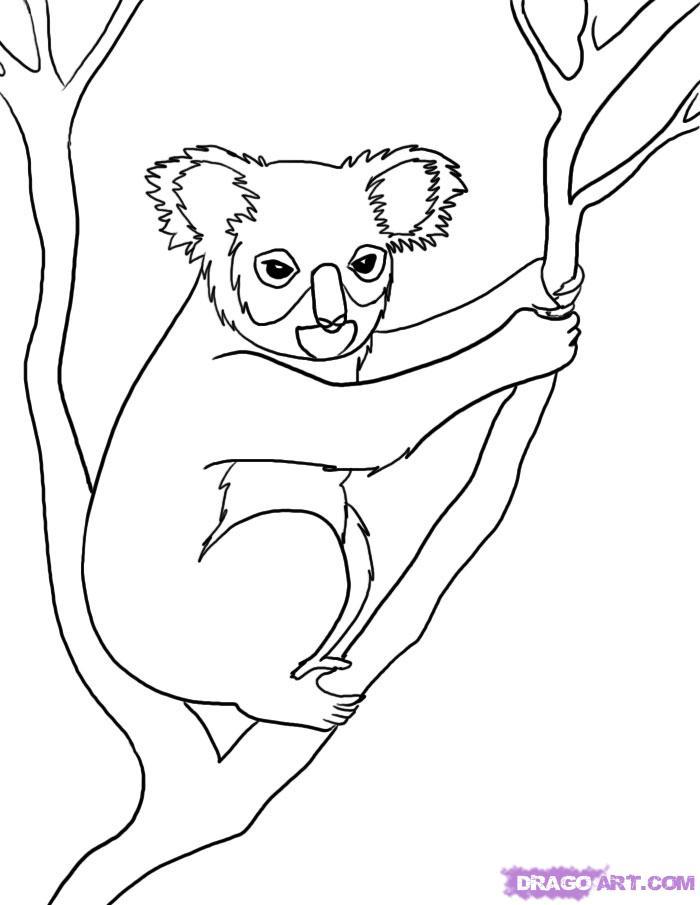Как нарисовать коалу на дереве поэтапно