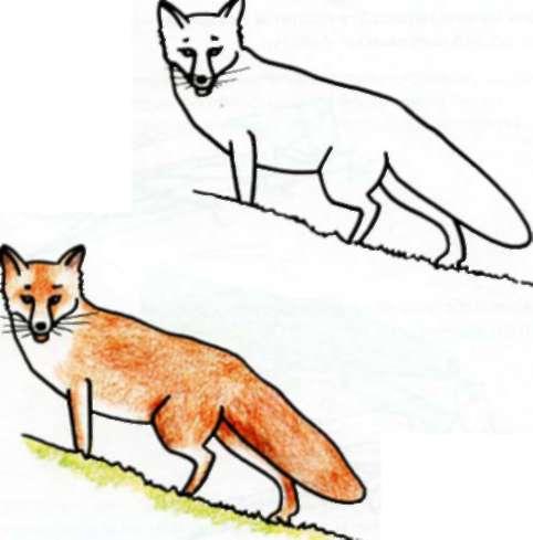 у лисы короткие лапы,