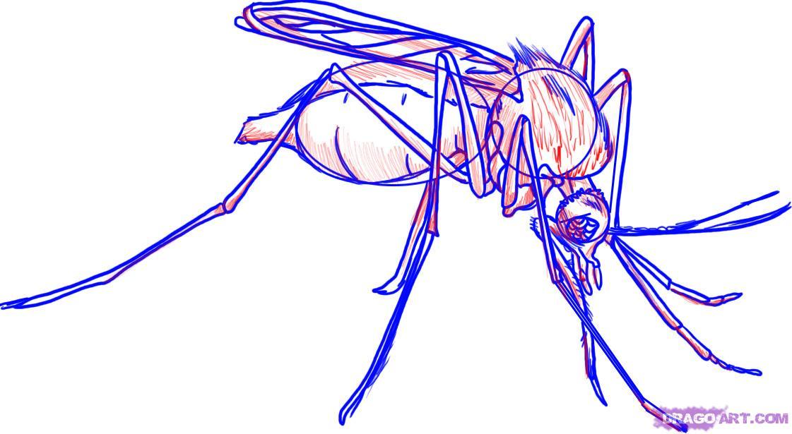 Как нарисовать комара поэтапно