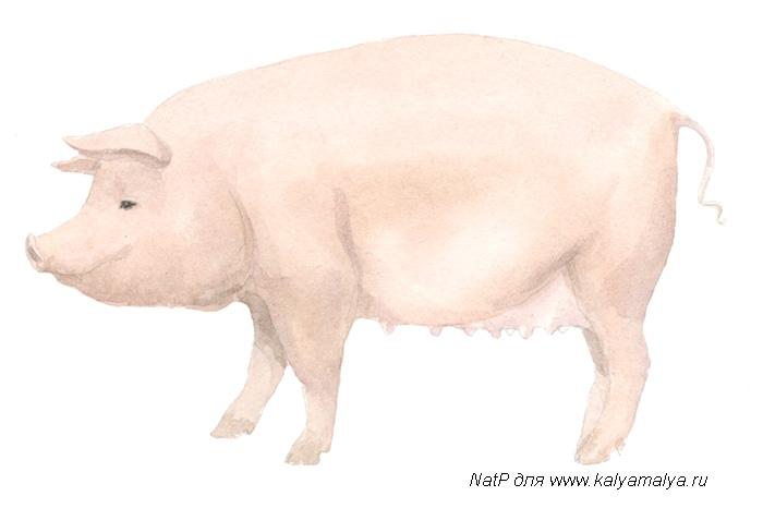 Как просто нарисовать свинку - фото 4