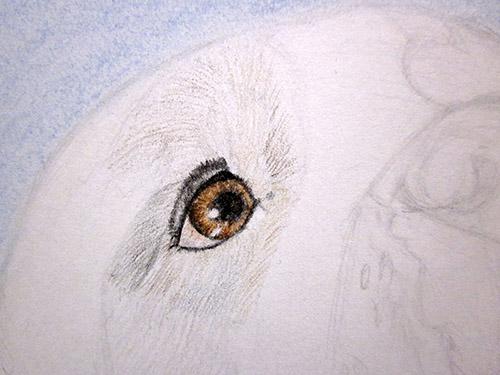 Рисуем сенбернаров