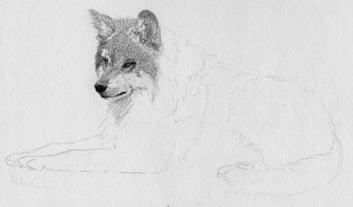 Как рисовать мех