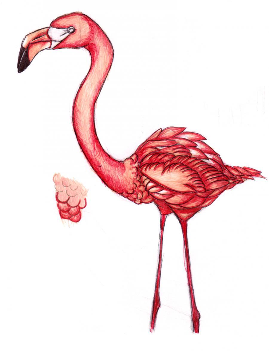 Разукрашиваем фламинго карандашами или ручкой - шаг 11