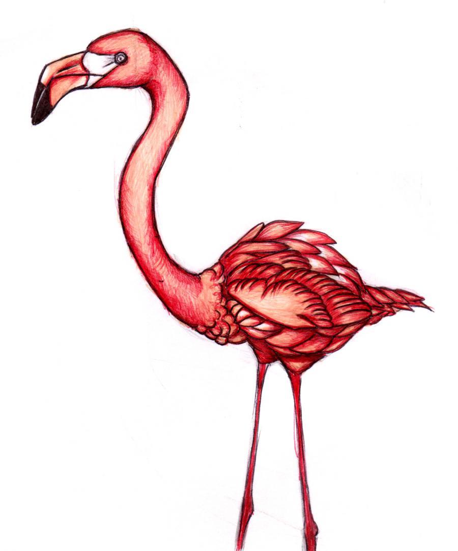 Разукрашиваем фламинго карандашами или ручкой