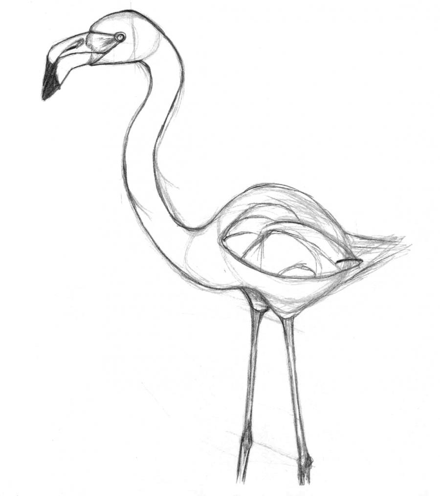 Разукрашиваем фламинго карандашами или ручкой - шаг 2