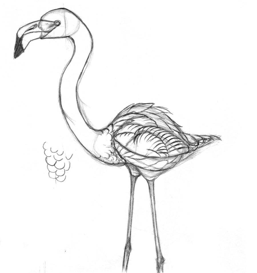 Разукрашиваем фламинго карандашами или ручкой - шаг 3
