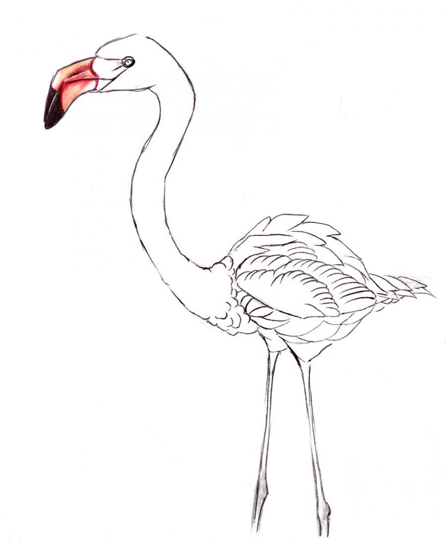 Разукрашиваем фламинго карандашами или ручкой - шаг 5