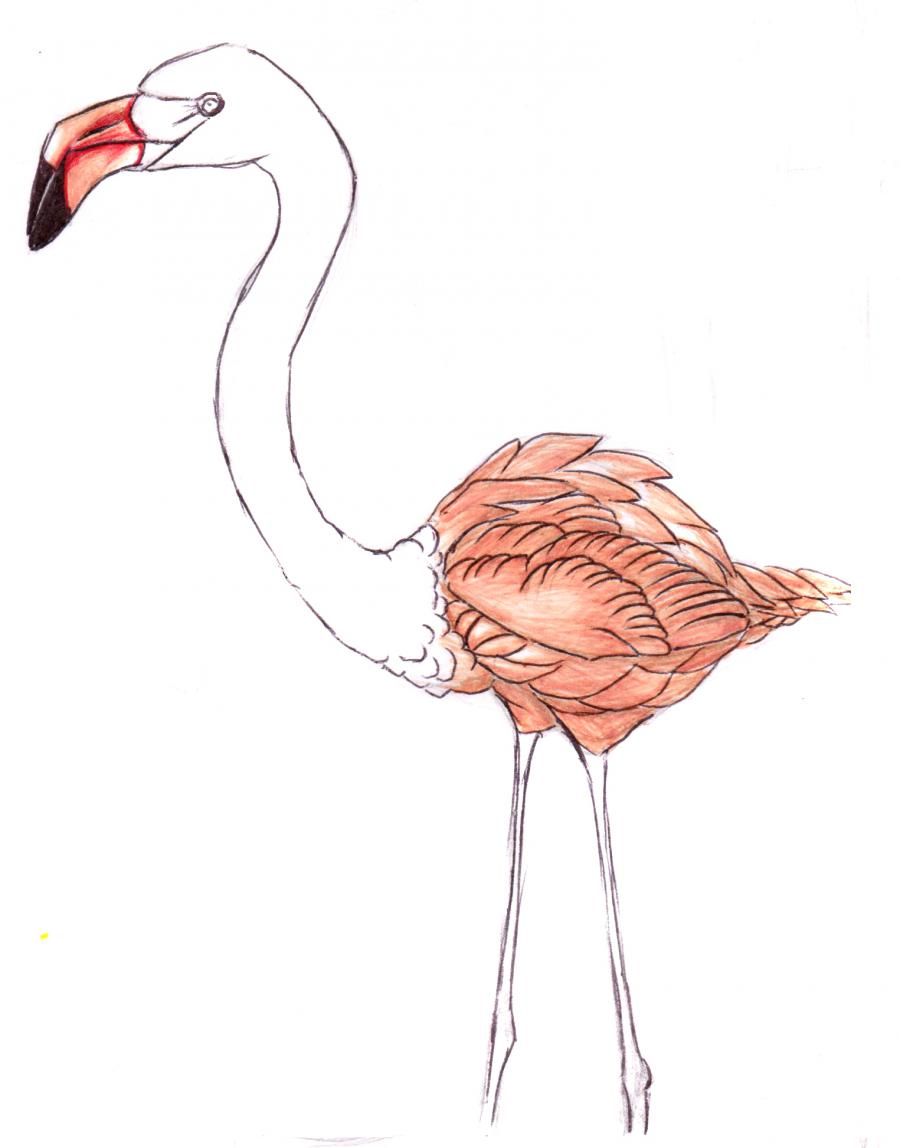 Разукрашиваем фламинго карандашами или ручкой - шаг 6
