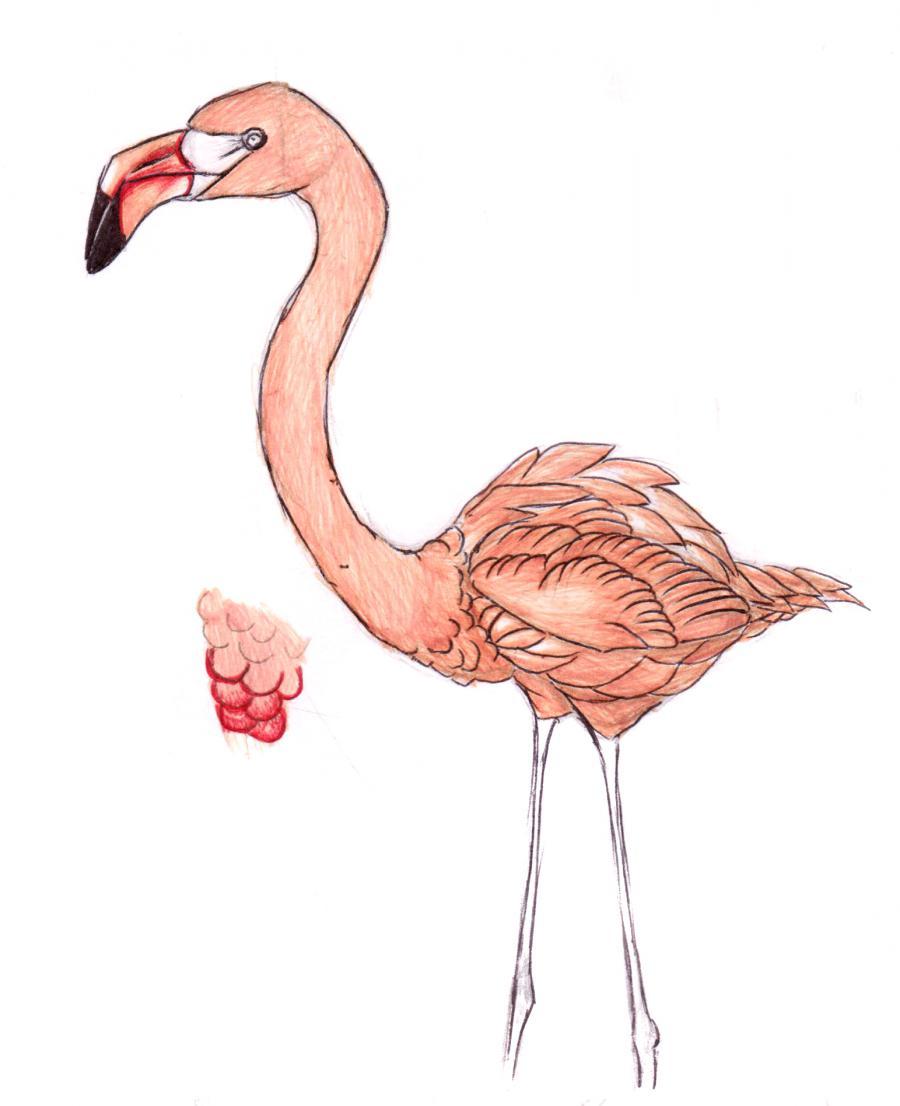 Разукрашиваем фламинго карандашами или ручкой - шаг 7