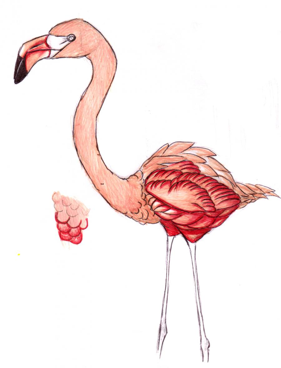 Разукрашиваем фламинго карандашами или ручкой - шаг 9