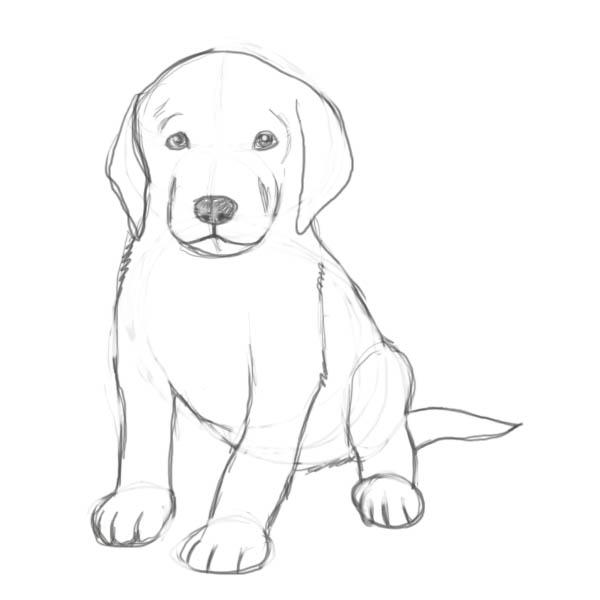 Как Рисовать Собак - Lesyadraw ru