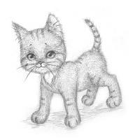 котенка карандашом