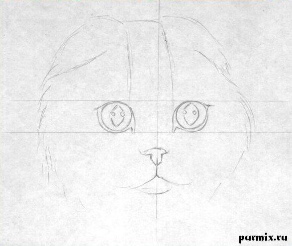 Рисуем шотландскую вислоухую кошку простым - шаг 1