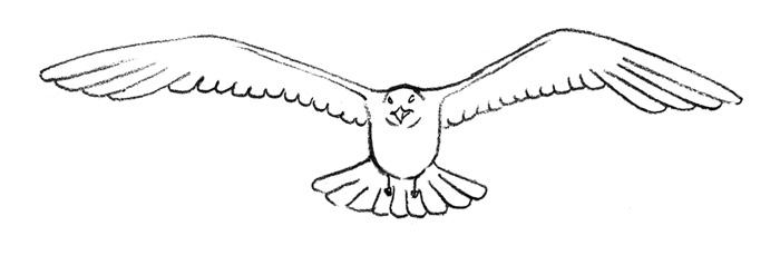 Учимся рисовать Чайку поэтапно.  Уроки рисования карандашом - Животные.  Дата: 25.03.2011.