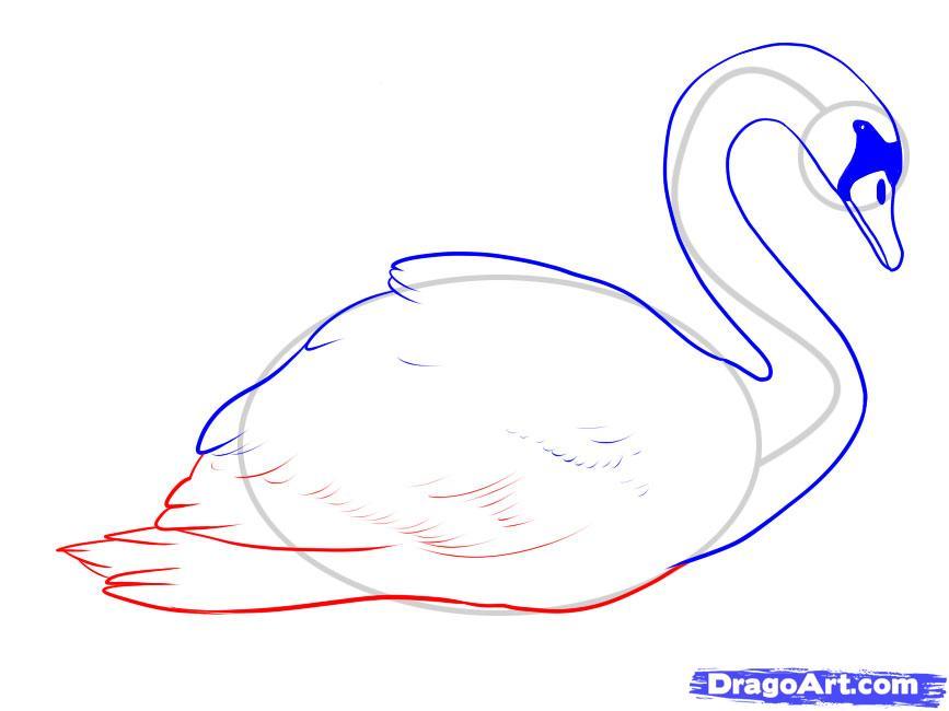 Учимся рисовать лебедя - шаг 7