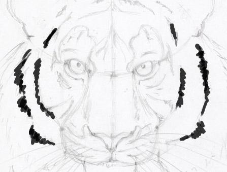 Рисуем морду тигра - шаг 11