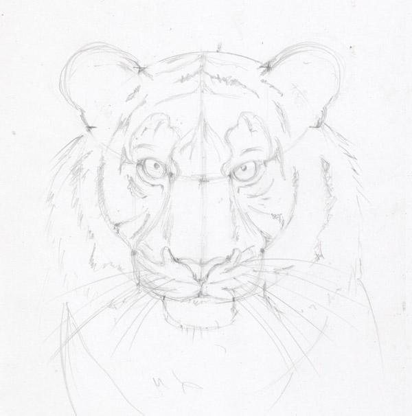 Рисунки карандашом для срисовки тигр