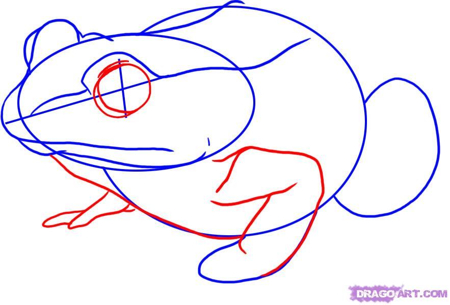 Рисуем лягушку   для начинающих - фото 3