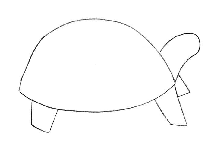 Как просто нарисовать черепаху - шаг 1