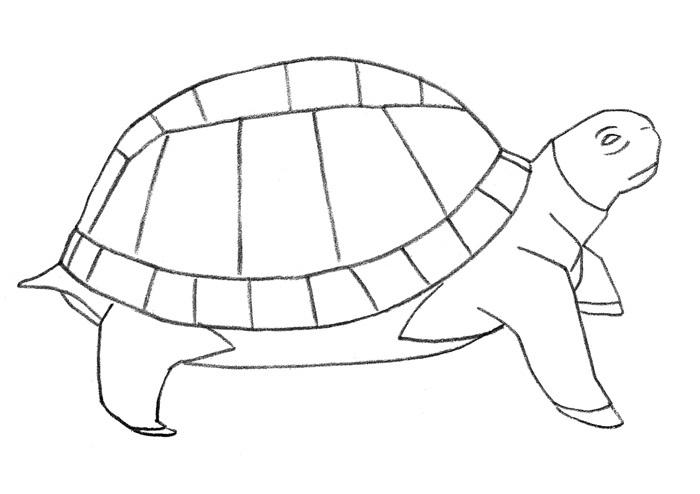 Как просто нарисовать черепаху - шаг 3
