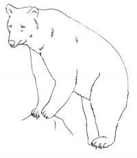 Учимся рисовать медведя