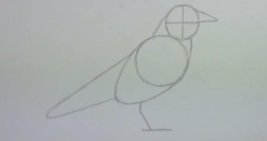 Учимся рисовать ворону простым - шаг 2