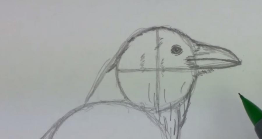 Учимся рисовать ворону простым - шаг 3