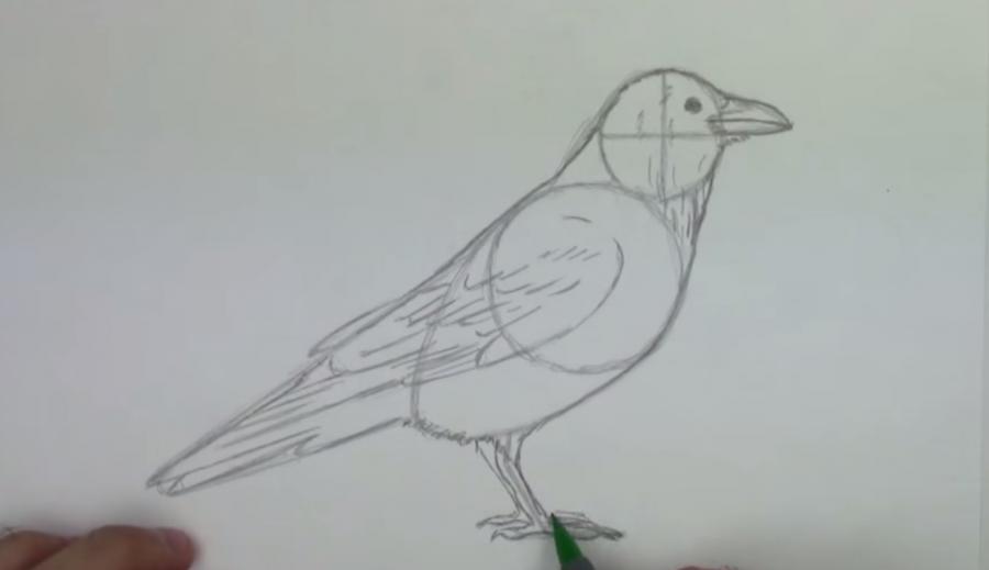 Учимся рисовать ворону простым - шаг 4