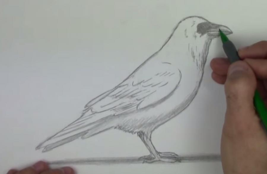 Учимся рисовать ворону простым - шаг 5