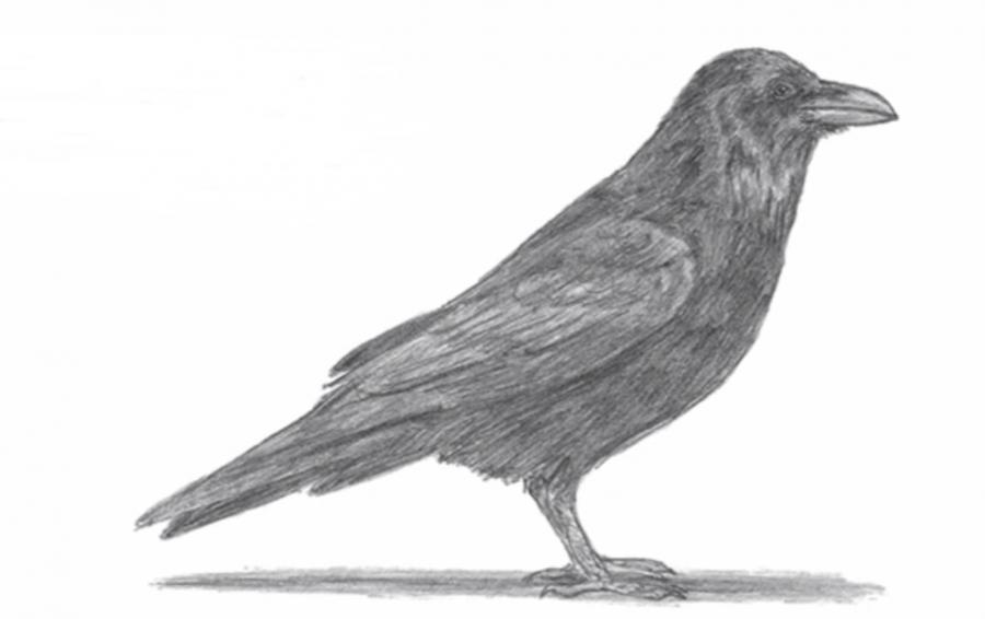 Учимся рисовать ворону простым - шаг 6