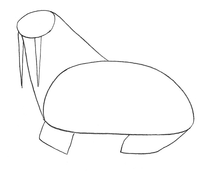 Рисуем моржа - фото 1