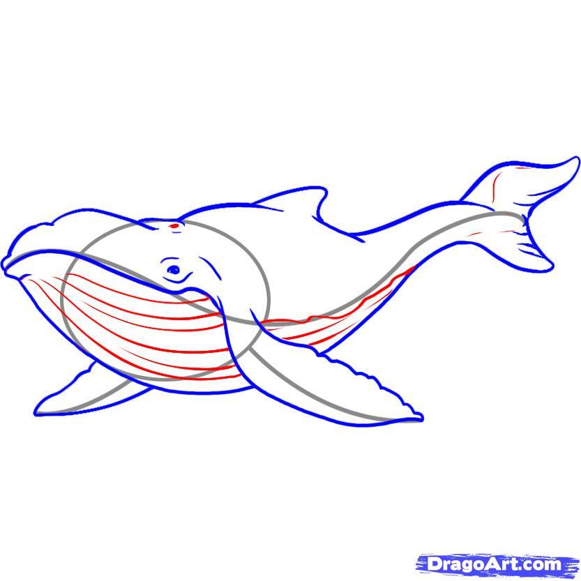Рисуем кита