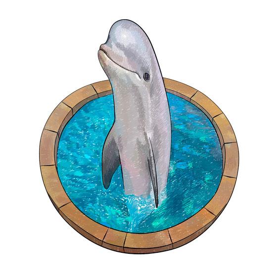 Как нарисовать 3d рисунок дельфина в