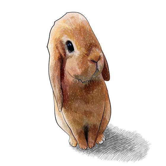 Как научиться рисовать 3d кролика