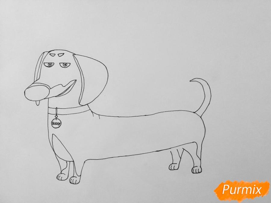 Рисуем Бадди из мультфильма Тайная жизнь домашних животных - шаг 6