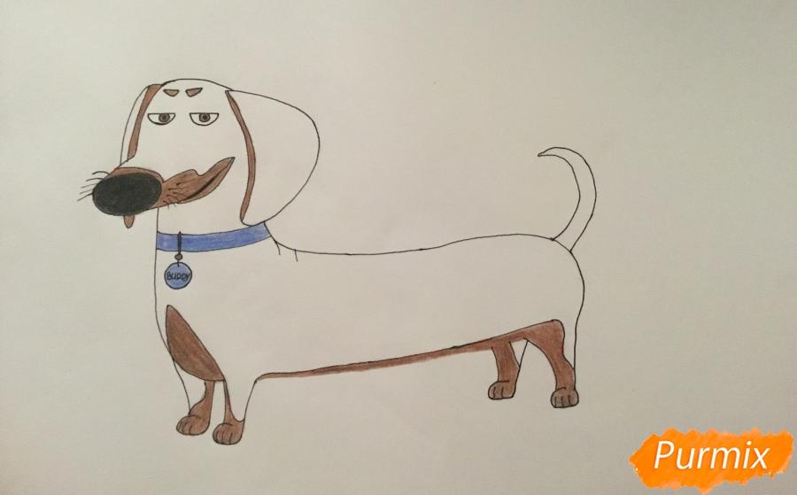 Рисуем Бадди из мультфильма Тайная жизнь домашних животных - шаг 7