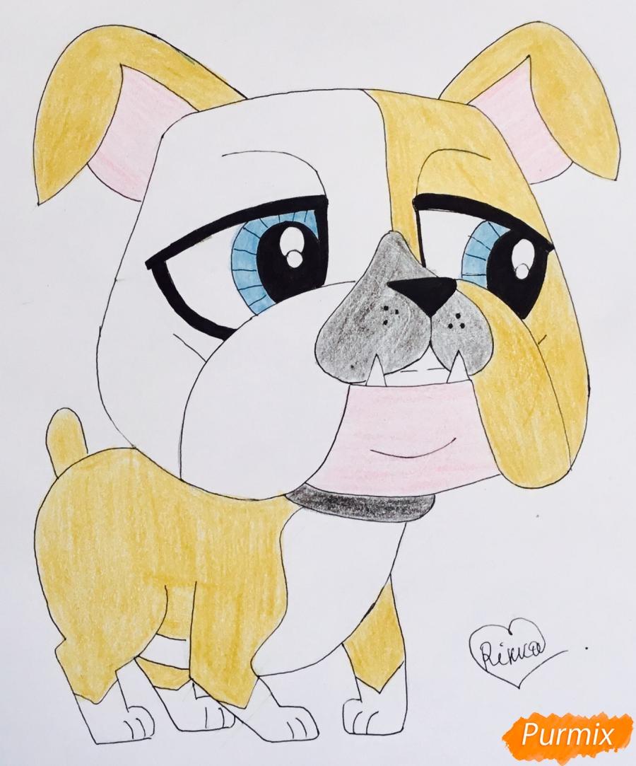 Как нарисовать пет шопа бульдога из мультфильма My Littlest Pet Shop карандашом поэтапно