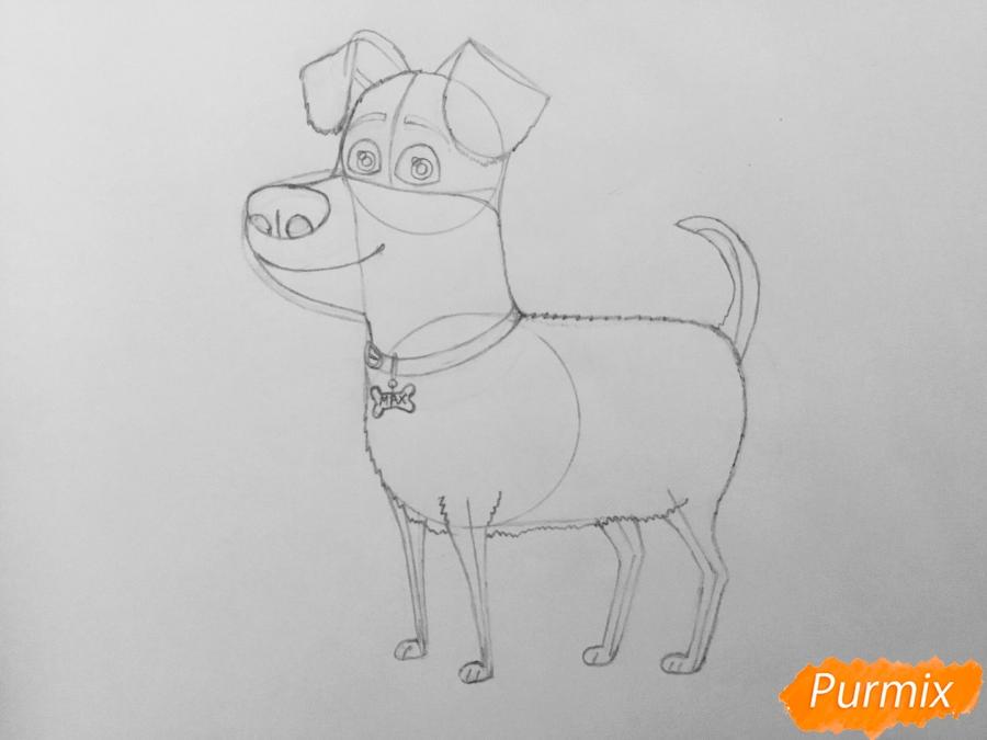 Рисуем собаку Макса из мультфильма Тайная жизнь домашних животных - шаг 7
