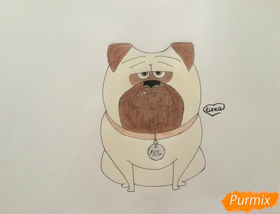 Как нарисовать Мела из мультфильма Тайная жизнь домашних животных карандашом поэтапно