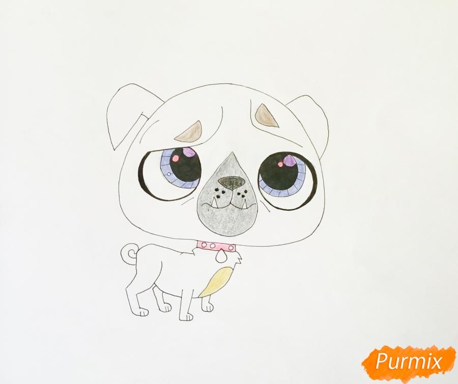 Рисуем мопса из мультфильма My Littlest Pet Shop - шаг 6