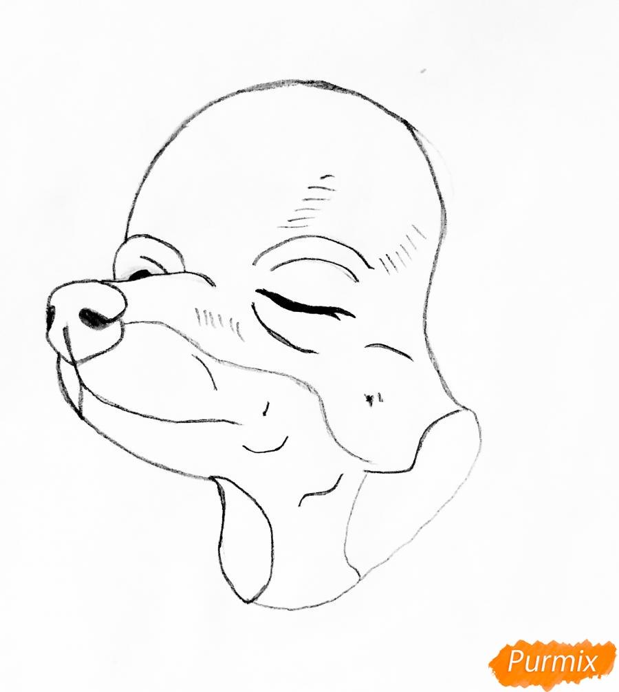 Рисуем двух новогодних собачек породы Русский Той Терьер - шаг 2