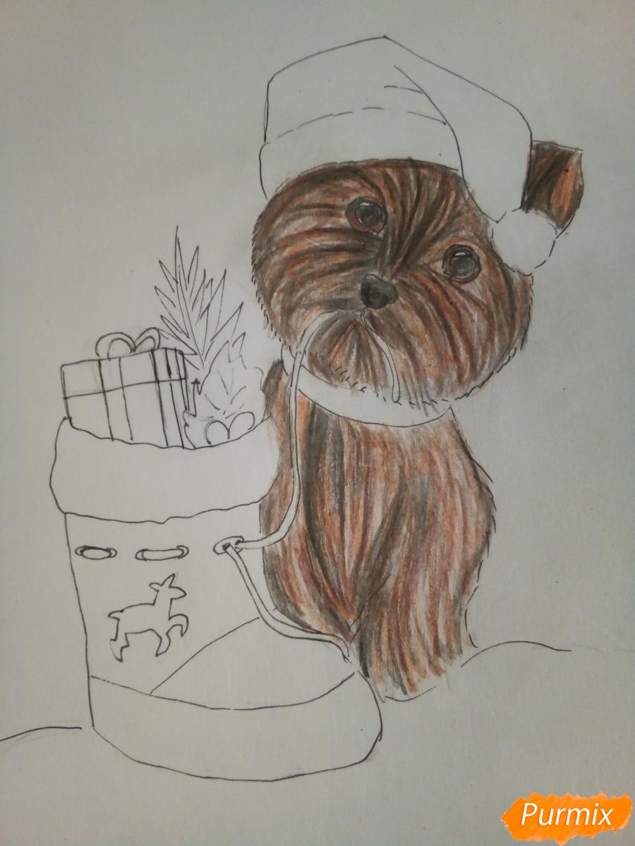 Рисуем новогоднего щеночка породы йоркширский терьер в шапочке - шаг 10