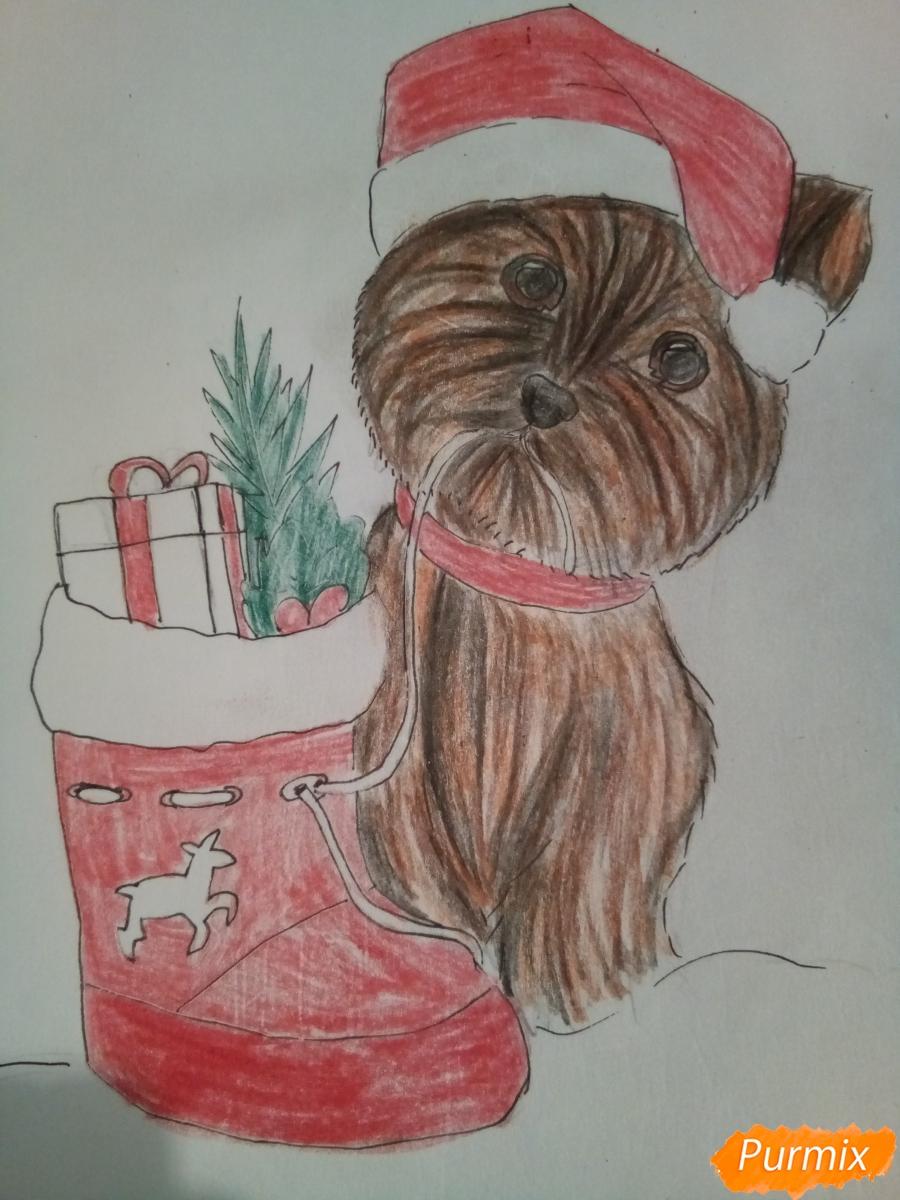 Рисуем новогоднего щеночка породы йоркширский терьер в шапочке - шаг 11