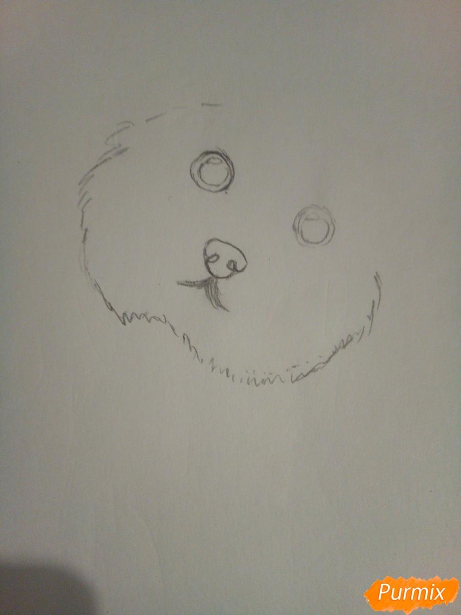 Рисуем новогоднего щеночка породы йоркширский терьер в шапочке - шаг 2