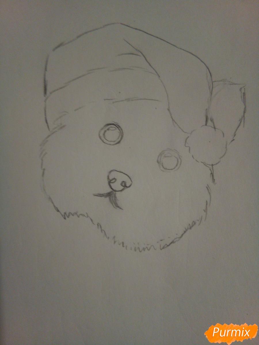 Рисуем новогоднего щеночка породы йоркширский терьер в шапочке - шаг 3
