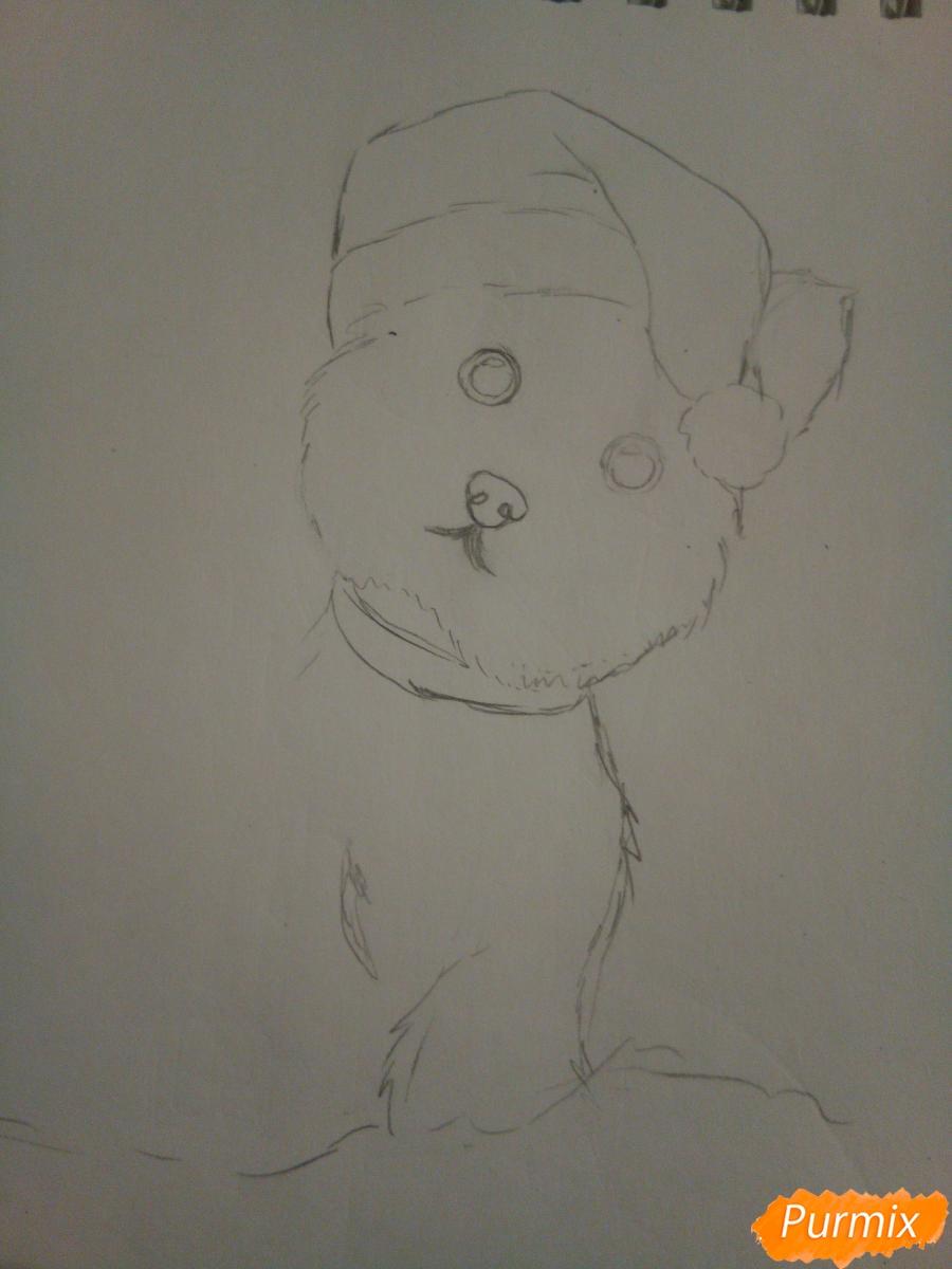 Рисуем новогоднего щеночка породы йоркширский терьер в шапочке - шаг 4