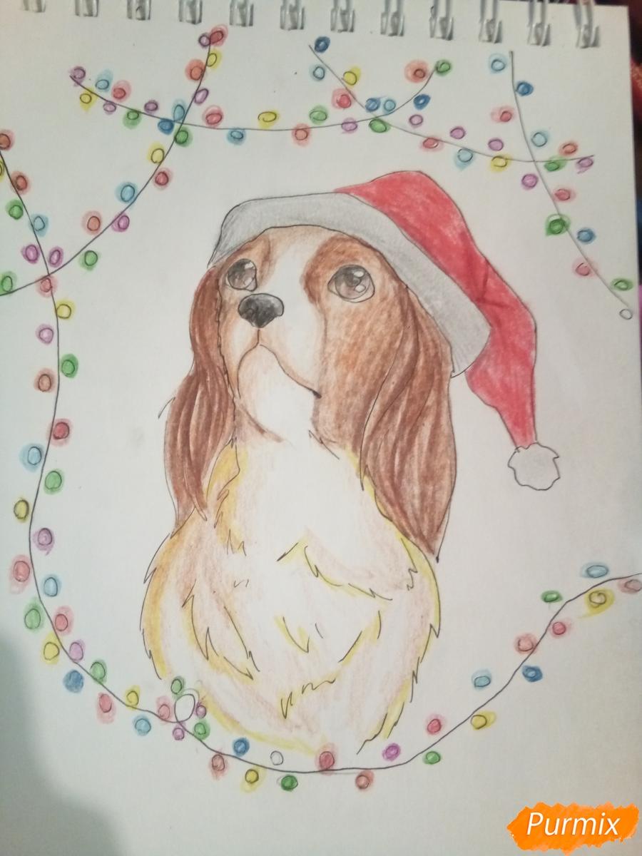 Рисуем собачку породы кавалер кинг-чарльз-спаниель на новый год - шаг 11