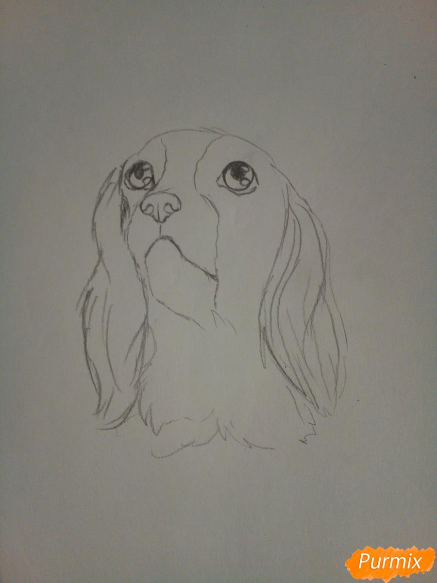 Рисуем собачку породы кавалер кинг-чарльз-спаниель на новый год - шаг 3