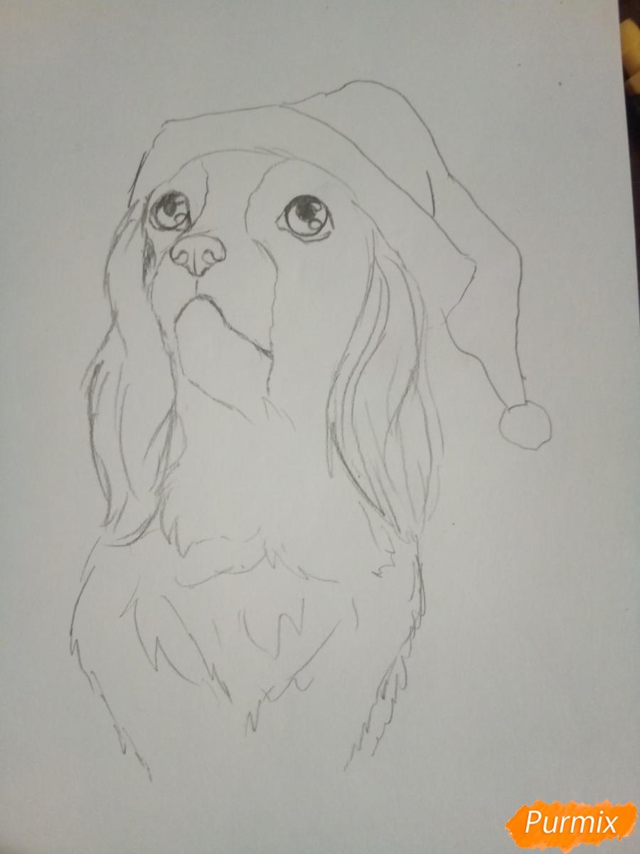 Рисуем собачку породы кавалер кинг-чарльз-спаниель на новый год - шаг 4
